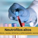 Neutrófilos Altos: Valores, Causas, Síntomas y Enfermedades Asociadas