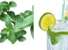 menta y limon