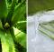 las propiedades curativas de la sabila