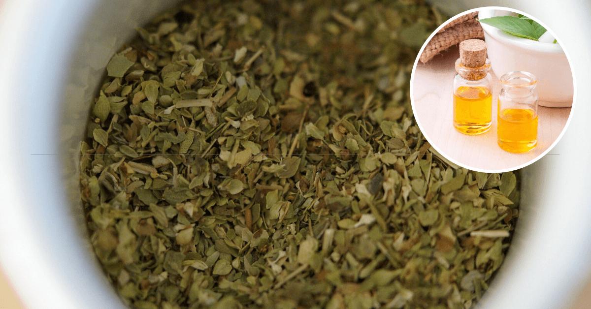 Remedios caseros para el hongo de las uñas con oregano